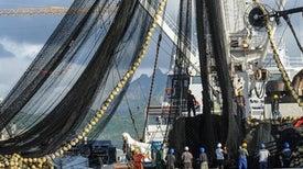الأقمار الصناعية تكشف ممارسات شركات الصيد في أعالي البحار