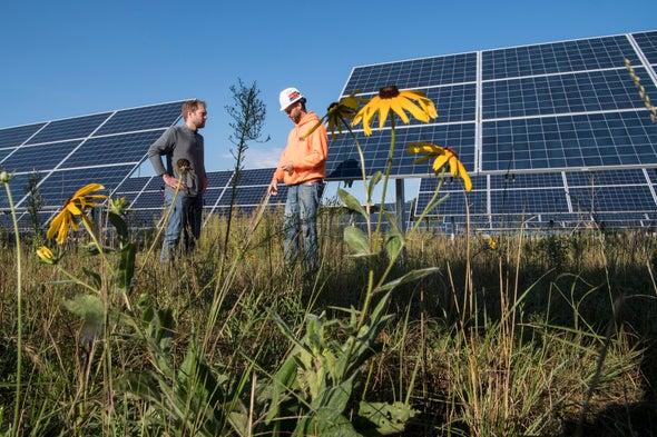 مزارع الطاقة الشمسية تمنح بصيصًا من الأمل للنحل والفراشات