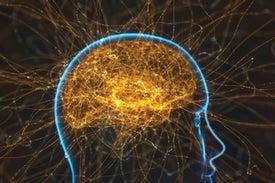 العلماء يرصدون دائرة عصبية مرتبطة بالإدمان في الفئران