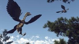 اكتشاف أحد أكبر الزواحف الطائرة التي حلقت في السماء