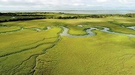 أنواع ستختفي: التغيُّر المناخي يبدّل قواعد التراتب الهرمي في النظام الإيكولوجي