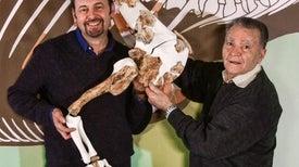 اكتشاف أقدم ديناصور مفترس في العالم