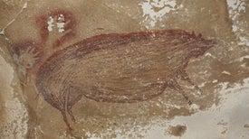 اكتشاف أقدم رسوم لحيوانات على جدار كهف في إندونيسيا