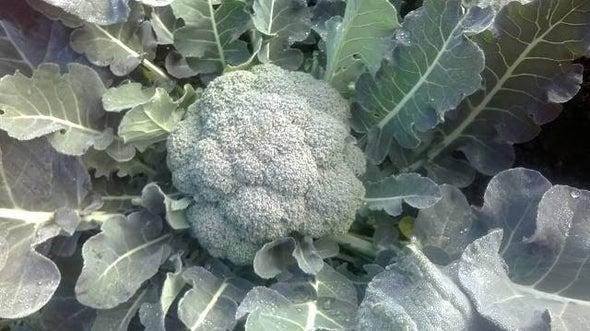 12 نوعًا من الأعشاب قد تساعد على الوقاية من سرطان الكبد