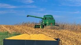 """تقنيات """"التكثيف المستدام"""" تعظم إنتاج الوقود الحيوي"""