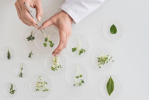 دراسة النباتات: المهارة المفقودة