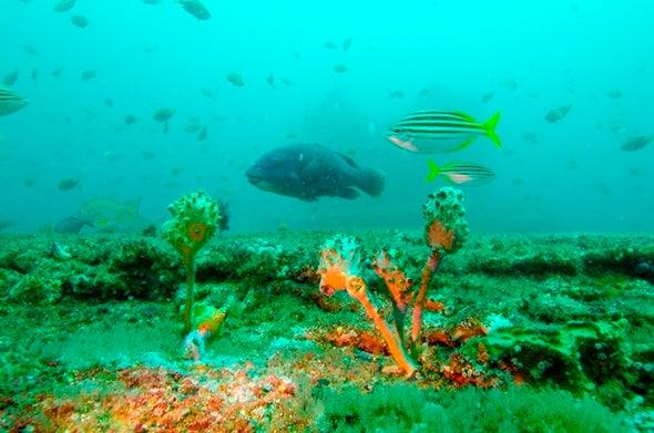 محطات تحلية المياه تؤثر على تجمعات الأسماك