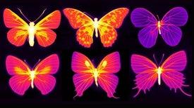 تأثير الفراشة الرائع: تجهيزات الحشرات يمكن أن تكون مصدر إلهام لتقنية الإشعاع الحراري