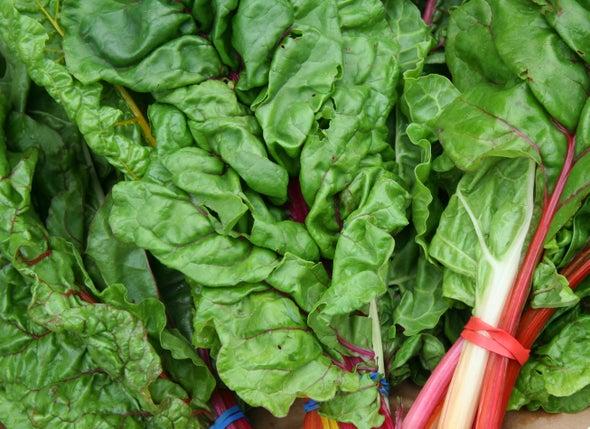 فوائد طبية جديدة لنبات السلق