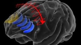 نصفا الدماغ يتعاونان لتعزيز قدرة البشر على اتخاذ القرار
