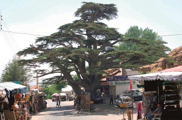 دراسة ترصد احتمالات التقارب المذهبي في النموذج اللبناني