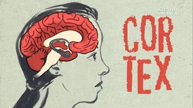 كيف يغير التأمل الدماغ؟