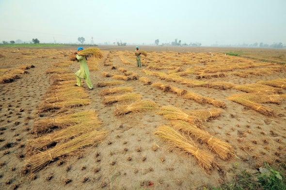 إطعام أجيال المستقبل في ظل مناخ متغير