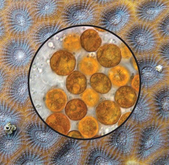البنية الفريدة لجينوم الشريك التكافلي للمرجان