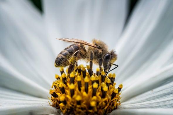 مفاجأة: النحل يحتاج إلى اللحم