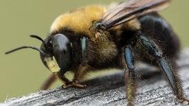 هل لدى الحشرات عواطف؟