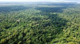 مُخبر بوليسي «نباتي» للكشف عن أماكن الجثث البشرية المتحللة