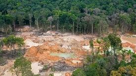 الغابات أكثر قدرةً على مواجهة ارتفاع درجات الحرارة العالمية