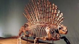 تطور أكتاف الثدييات مهد لتنوُّع شكل العمود الفقري
