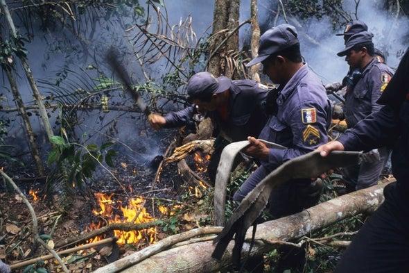 أسباب متضاربة وراء ارتفاع معدل حرائق غابات الأمازون بأكثر من 80%