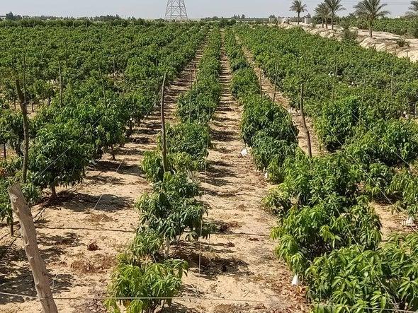 التغيرات المناخية تهدد الأمن الغذائي المصري