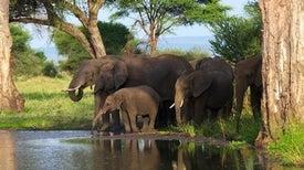 تَراجُع معدلات الصيد الجائر للأفيال الأفريقية