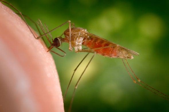 """""""محركات الجينات"""" تقود البعوض إلى الموت مبكرًا"""
