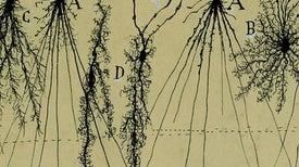 """جولجي وكاخال: رجلانِ لوّنا الخلايا العصبيةَ وكشَفا """"جمالَها"""" الداخلي"""