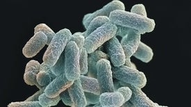 ميكروب مُهندَس وراثيًّا يسبب اضطرابًا في شجرة الحياة