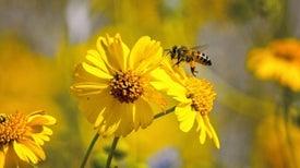 كيف تتفادى هجمات أسراب النحل صيفًا