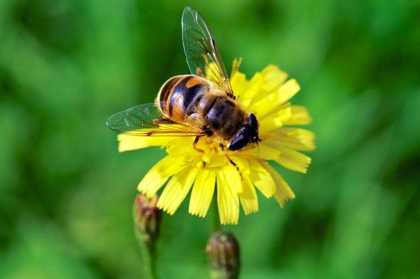 النحل يفضِّل الزهور التي توفر له النيكوتين