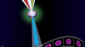 على خطى زويل.. تطوير «الميكروسكوب الفائق» لرصد الإلكترونات