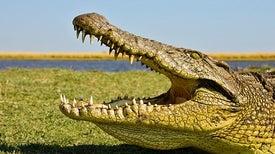 «واحة سوكس» يحل لغز حقبة عصر الديناصورات في أفريقيا