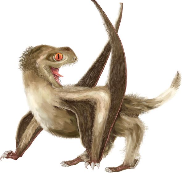 """""""الريش"""" كان يغطي أجسام """"التيراصورات"""""""