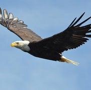 طائرات شراعية يُمكنها تعلُّم التحليق كالطيور