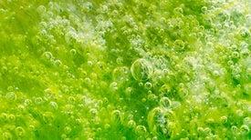 تحديد صفات جينية فريدة للطحالب الخضراء بالإمارات