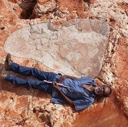 في استراليا..أكبر أثر لقدم ديناصور في العالم