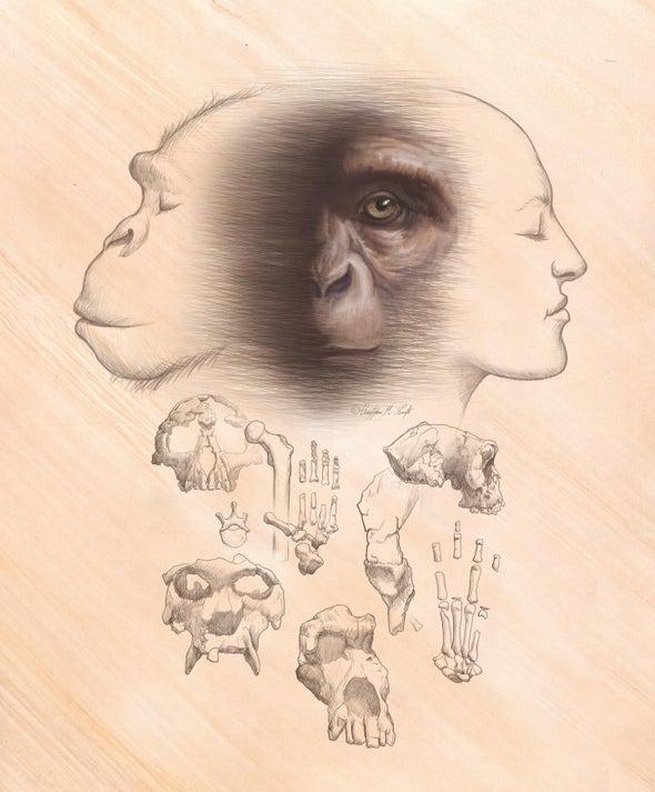 أصل الإنسان لا يزال قيد التحقق