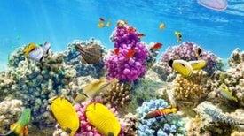 الكائنات البحرية أسرع استجابةً لتغيرات المناخ