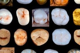 إنسان «النياندرتال» انفصل عن البشر المعاصرين قبل 800 ألف سنة