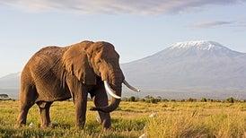 تقدم كبير في مجال حماية المحميات الطبيعية