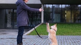 تدريب الكلاب بـ«العقاب» يجعلها أكثر تشاؤمًا وإجهادًا