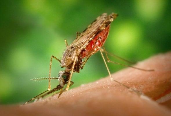 «بعوضة الأنوفيلة» تواصل مقاومتها للمُبيدات الحشرية