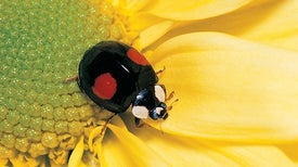 الحفاظ على التنوع البيولوجي يعزِّز إنتاجية الحاصلات الزراعية