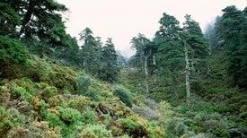 زراعة الأشجار تزيد القدرة على عزل انبعاثات الكربون في الغابات