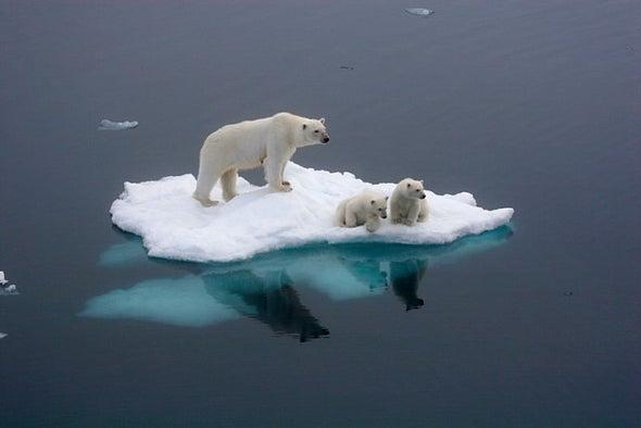 الدب القطبي يتعرض لمستويات أعلى من التلوث في البحر
