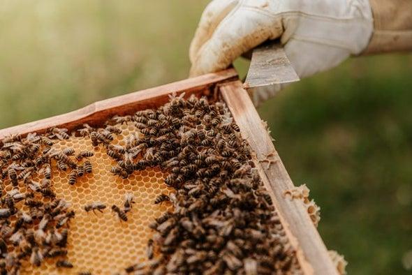 تفاعُلات الكيماويات الزراعية أحد عوامل ارتفاع وفيات النحل