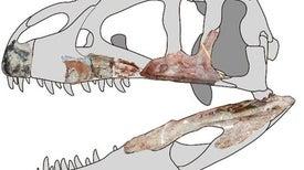 """""""اللص التايلاندي"""".. أول ديناصور عملاق مفترس يتم تسجيله بجنوب شرق آسيا"""