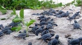 تقنية ثلاثية الأبعاد للإيقاع بتجار بيض السلاحف البحرية