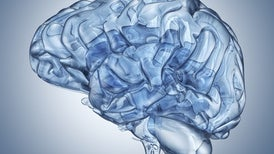 علاج دماغي محتمل مضاد للشيخوخة يُظهر آفاقًا واعدة في الفئران